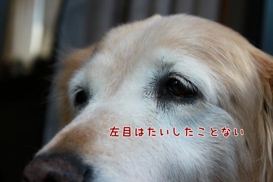 IMG_0851_R.jpg