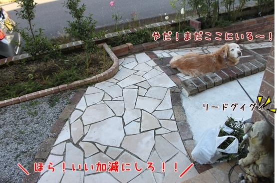 IMG_3478_R.jpg