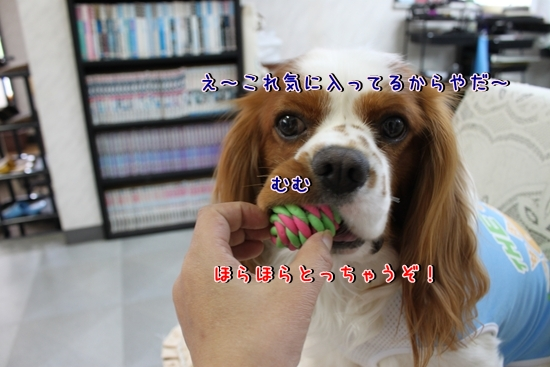 IMG_9167_R.jpg
