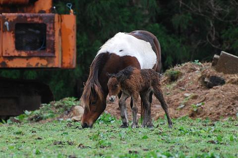 生まれた子馬が1