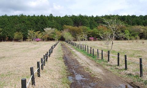 長ノ山湿原の風景は