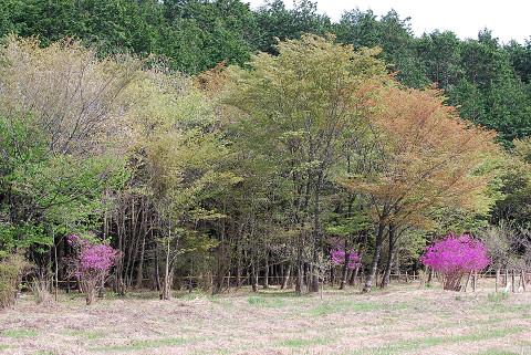 長ノ山湿原の風景は2