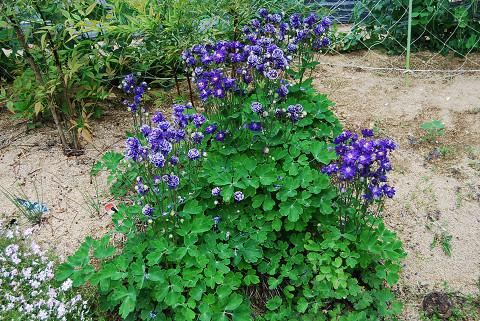 花園の花1