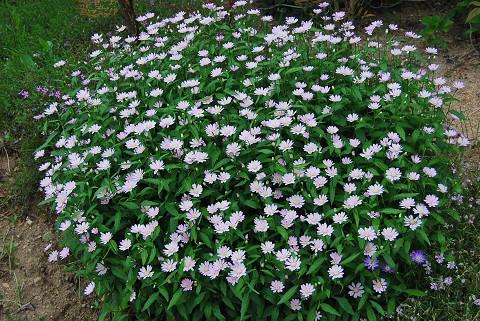 花園の花2