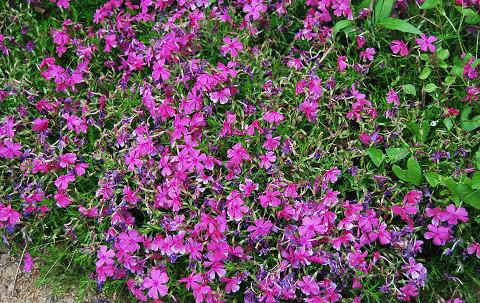 花園の花3