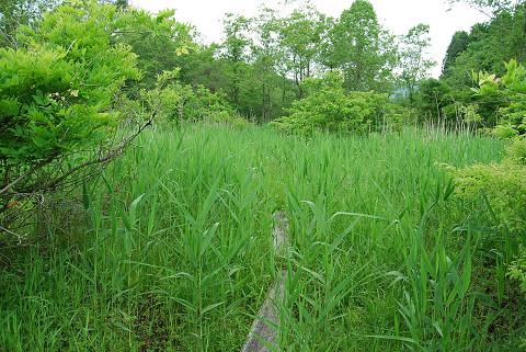 長命湿地草ぼうぼう