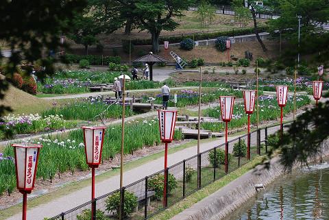 東公園菖蒲まつり会場
