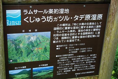 くじゅう坊ガツルタデ湿原