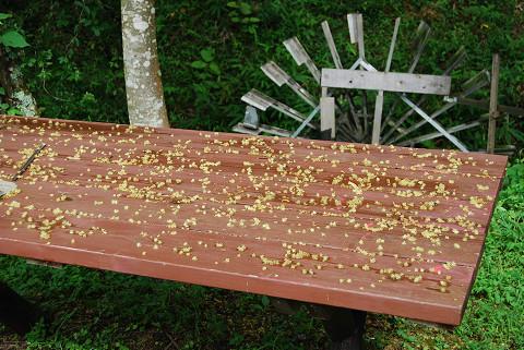 テーブルの花が