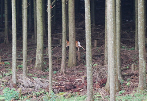 小鹿が逃げていった