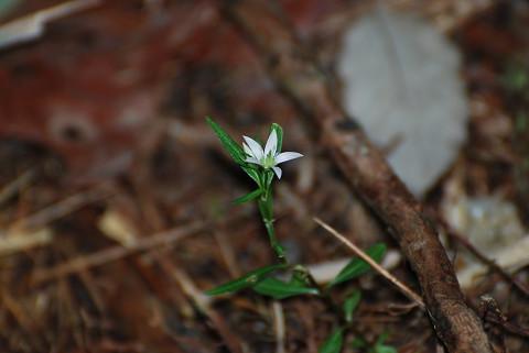この花は何だろう?