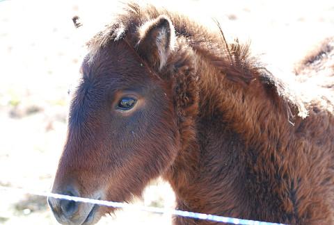 ポニーの新生馬