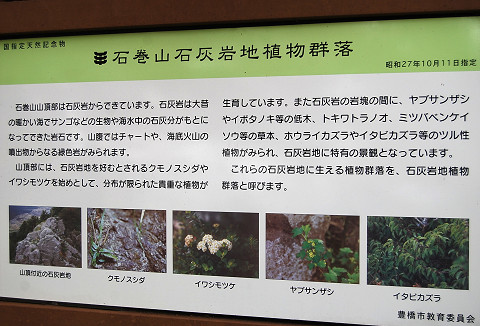 石灰岩地植物群