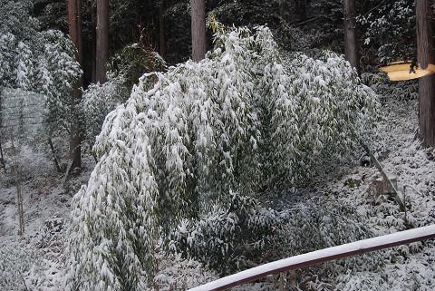 雪の重みで竹がたわんだ