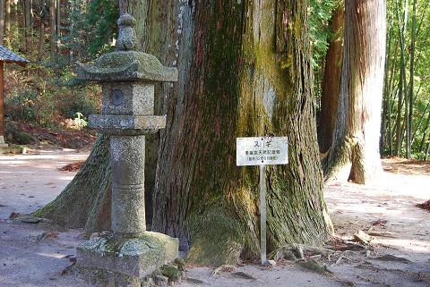 杉の巨木記念物
