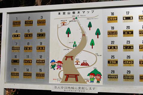 樹木マップ