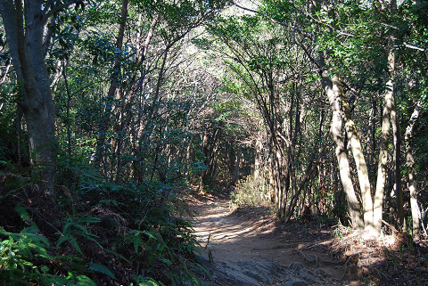 商用樹の森が