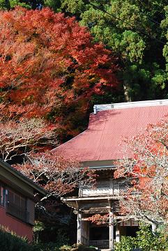 善福寺とモミジ