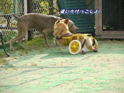 追いかけっこ (2)