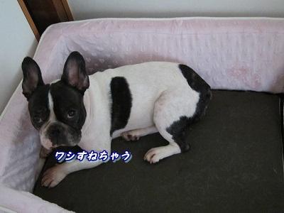 新しいベッド (2)