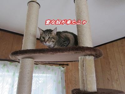 にゃんこ (1)