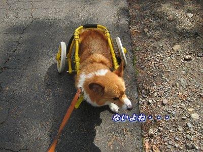 源泉 (4)
