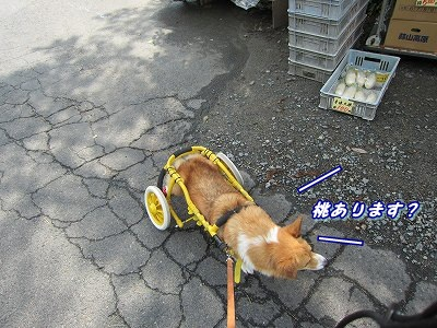 源泉 (3)