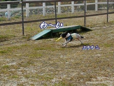 横取り (4)