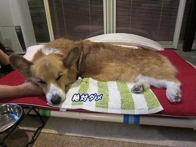 手枕 (3)
