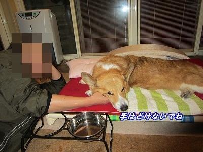 手枕 (1)