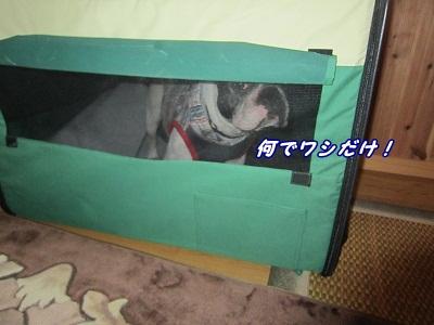 実家へ (2)