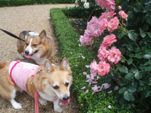 綺麗な薔薇と可愛い子供たち