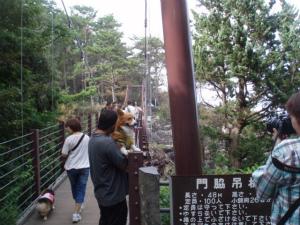 つり橋に来ました。