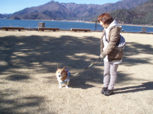 湖畔の芝生をお散歩
