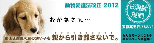 8syu_c_main_L[1]