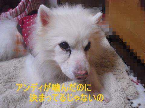 CIMG9429.jpg