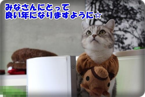 IMG_7662-004.jpg