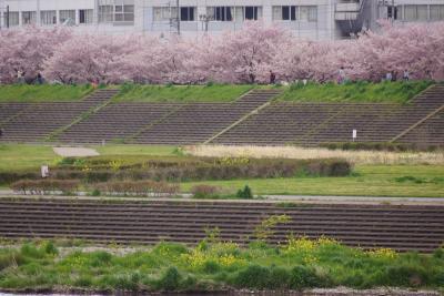 小山桜祭り