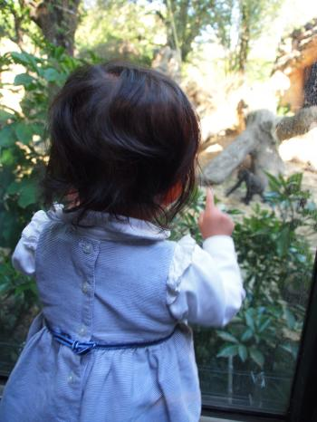 ゴリラを見るちび子