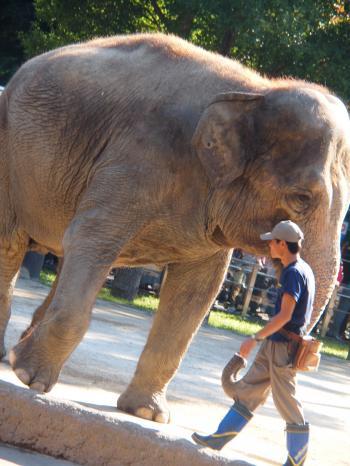 ゾウさんに感激