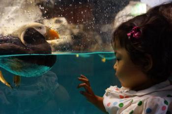 水族館 (5)