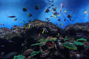 水族館 (3)
