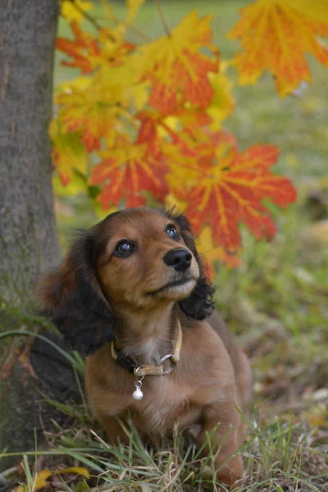 秋の日のレナちゃん