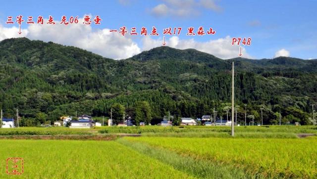 m310so_05.jpg