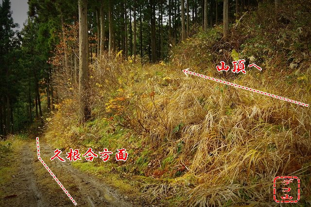 yzws24nm_03.jpg