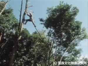F054_3_西米良木から木へ01