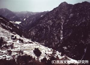 F007椿山ph003_300