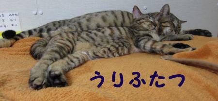 うりふたつ・・猫二つ