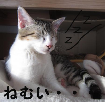 眠くなっちゃった・・・