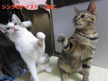 猫シンクロ